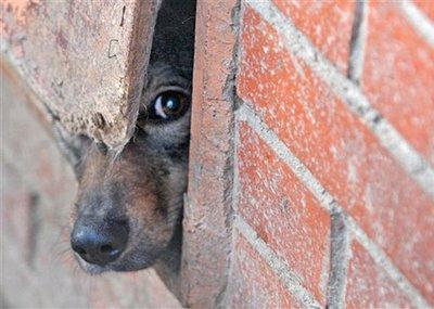 Doa-se cães de raça