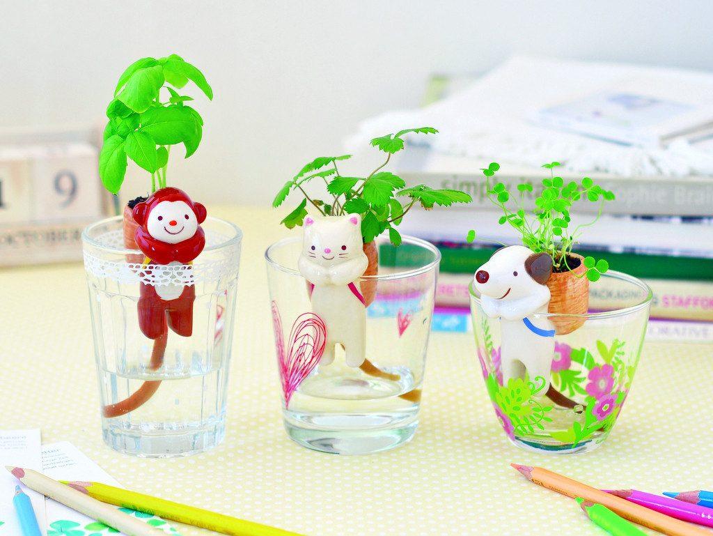 Chuppons: uma maneira fofa de ter plantas em casa