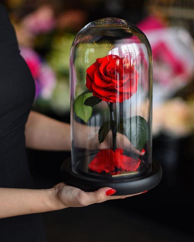 rosa_bela_fera_forever_rose_01
